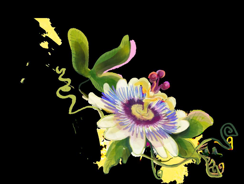 Die Passionsblume in Lioran - Wirkt gegen nervöse Unruhe und Schlaflosigkeit