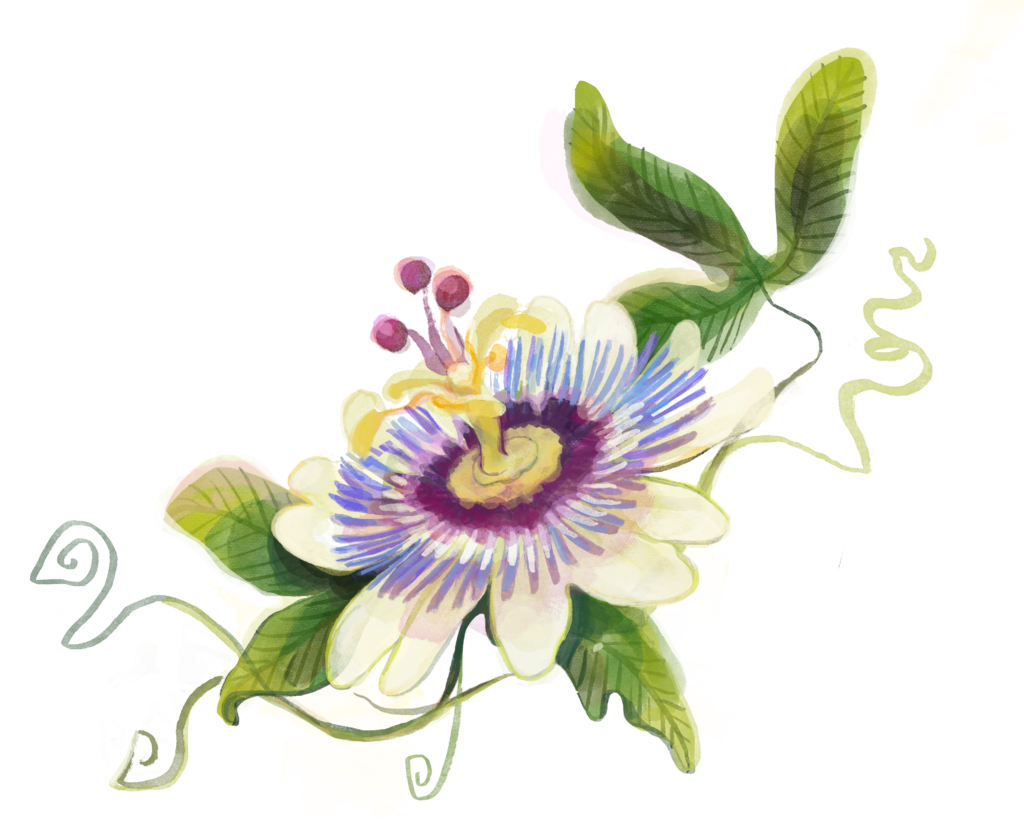Lioran Wirkung: Die Passionsblume hilft bei Schlafporblemen und innerer Unruhe